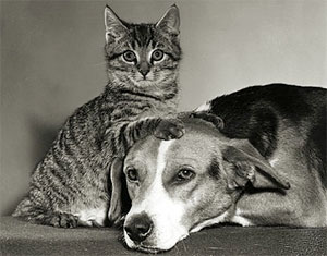 A cat and dog lying together